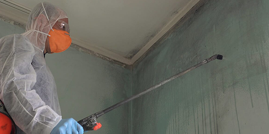 Mold Removal and Remediation Services